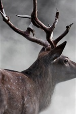 Preview iPhone wallpaper Deer rear view, fog, morning
