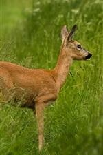 Preview iPhone wallpaper Deer standing in grass