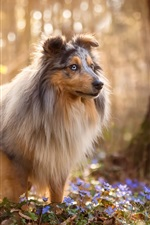 Preview iPhone wallpaper Dog, forest, blue wildflowers