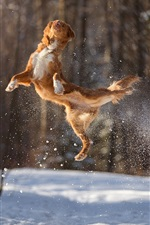 Preview iPhone wallpaper Dog jumping, snow, winter
