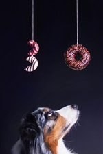 Preview iPhone wallpaper Dog look at bagels