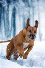 Preview iPhone wallpaper Dog running in the snow, winter