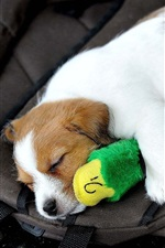 Preview iPhone wallpaper Dog sleep, toy duck