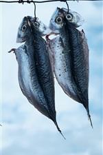 iPhone fondos de pantalla Secado de los peces