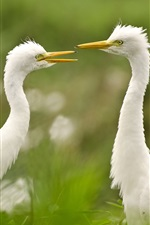 Preview iPhone wallpaper Egret, couple, grass