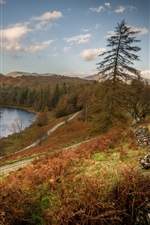 England, Cumbria, lake, trees, autumn