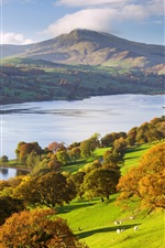 Preview iPhone wallpaper Exmoor National Park, UK, autumn, trees, river, slope