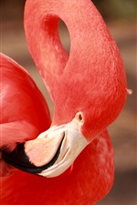 Preview iPhone wallpaper Flamingo, red feathers, beak, neck