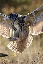 iPhone обои Полет совы, крылья, трава