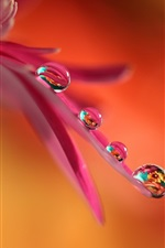 Preview iPhone wallpaper Flower pink petals, water drops, macro photography