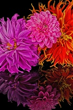 Preview iPhone wallpaper Flowers, reflection, black background