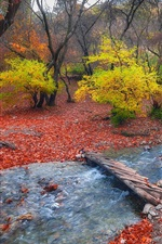 Foothills, trees, autumn, bridge, stream