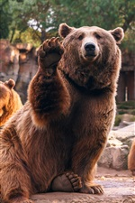 Preview iPhone wallpaper Four brown bears, stones