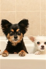 Preview iPhone wallpaper Four dogs in bathroom