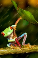 Preview iPhone wallpaper Frog in rain, leaf