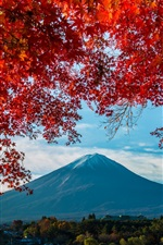 Preview iPhone wallpaper Fuji Mount, trees, red leaves, autumn, Japan