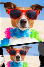 Preview iPhone wallpaper Funny dog use phone to photography, sunglasses