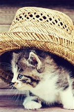 Preview iPhone wallpaper Funny kitten, hat