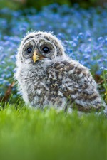 Preview iPhone wallpaper Furry little owl baby, grass, blue flowers background