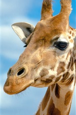 Preview iPhone wallpaper Giraffe head, blue sky