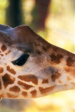 Preview iPhone wallpaper Giraffe, head, hand, zoo