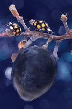 Preview iPhone wallpaper Grapes, ladybug, twigs, water drops