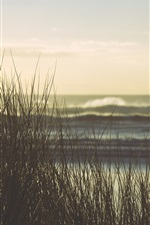 Preview iPhone wallpaper Grass, sea, dusk