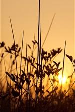 Preview iPhone wallpaper Grass, sunset, backlight