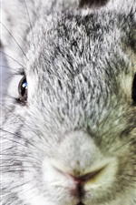 Preview iPhone wallpaper Gray rabbit face close-up