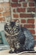 Preview iPhone wallpaper Gray striped cat look at you