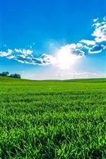 iPhone fondos de pantalla Campos verdes, cielo azul, nubes, sol, verano hermoso
