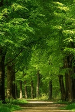 Preview iPhone wallpaper Green forest, trees, path