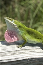 Preview iPhone wallpaper Green lizard climbing