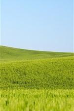 Preview iPhone wallpaper Green wheat fields, blue sky