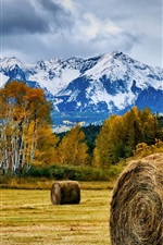 Hay, field, trees, mountains, autumn
