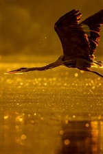 Preview iPhone wallpaper Heron flight, lake, dusk