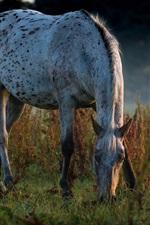 iPhone обои Лошадь есть траву, сумерки