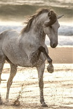 Preview iPhone wallpaper Horse walk in the beach, water splash, sea