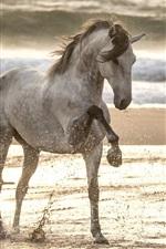 Passeio a cavalo na praia, respingo de água, mar