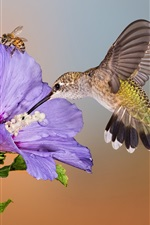 Preview iPhone wallpaper Hummingbird flight, purple flower, bee