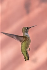 Preview iPhone wallpaper Hummingbird flight, yellow flowers