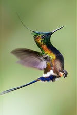 Preview iPhone wallpaper Hummingbird rise flight