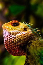 Preview iPhone wallpaper Iguana, head, scales, glare, reptile