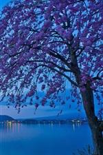 Preview iPhone wallpaper Japan, Lake Kawaguchi, sakura, tree flowers, morning