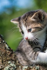 Preview iPhone wallpaper Kitten, tree, look, bokeh
