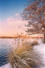 Preview iPhone wallpaper Lake, trees, snow, boat, birds
