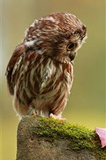 Preview iPhone wallpaper Little owl look at a leaf