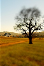 Preview iPhone wallpaper Lonely tree, houses, slope, blurry