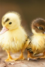 Preview iPhone wallpaper Lovely two ducklings
