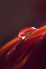 Macro photography, petal, water drop